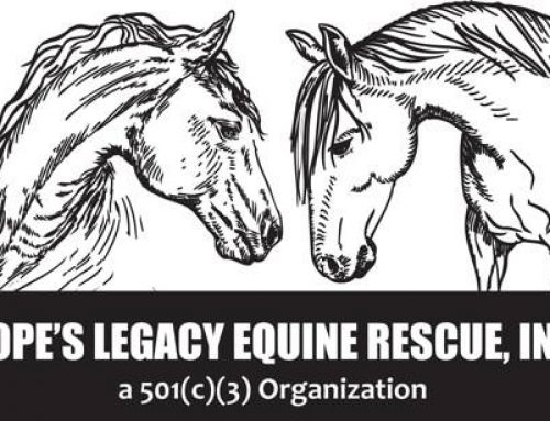 Community Connection: Hope's Legacy Equine Rescue
